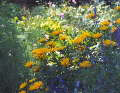 photo of wild flowers and herbs